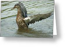 Watercovered Wingflapper Greeting Card