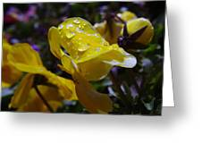 Waterdrops On A Pansy Greeting Card