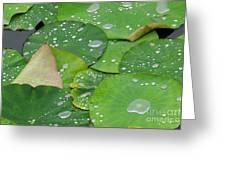 Waterdrops On Lotus Leaves Greeting Card