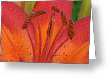 Watered Lily Greeting Card