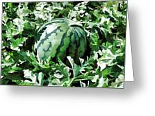 Waterelons In A Vegetable Garden Greeting Card