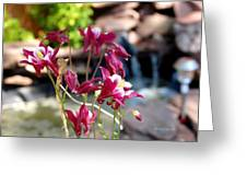 Waterfall And Columbine I - Pride Of Colorado Greeting Card