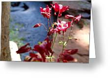 Waterfall And Columbine II - Pride Of Colorado Greeting Card