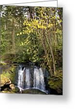 Waterfall In A Park, Whatcom Creek Greeting Card