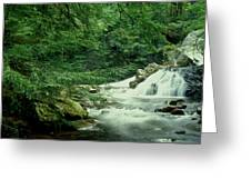Waterfall In Hemlock Forest Greeting Card