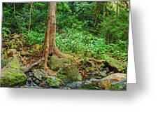 Waterfalls And Banyans Greeting Card