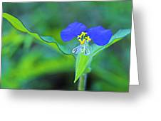 Watergrass Flower-st Lucia Greeting Card