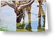 Watering Kudu Greeting Card