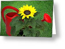 Watering With Sunflower Greeting Card