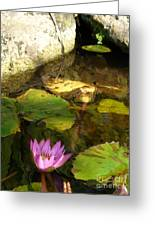 Waterlilies 2 Greeting Card