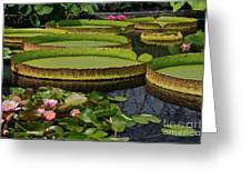 Waterlilies North And South Greeting Card