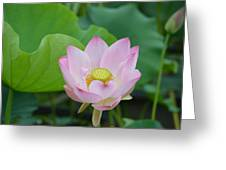 Waterlily Blossom With Seed Pod Greeting Card
