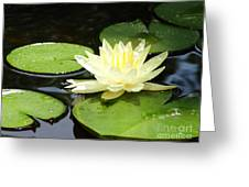 Waterlily In Yellow Greeting Card