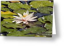 Waterlily On The Water Greeting Card
