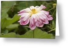 Waterlily Phasing Out Greeting Card