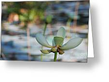 Waterlily Wash Horizontal Greeting Card