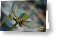 Waterlily Wash  Peekaboo Greeting Card