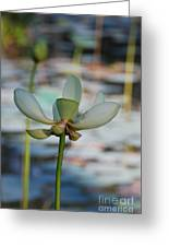 Waterlily Wash  Vertical Greeting Card