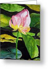 Waterlily Watercolor Greeting Card
