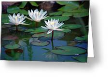 Waterlilys Greeting Card