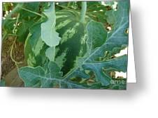 Watermelon Season  Greeting Card