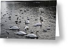 Waterpark Greeting Card