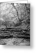 Waterscape In Bw Greeting Card