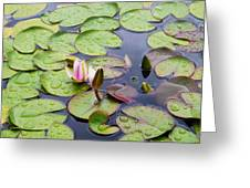 Watter Lily Greeting Card