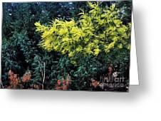 Wattyl - Wild Flower Of Australia Greeting Card