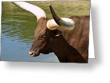 Watusi Bull Greeting Card