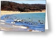 Waves Of Ducks Greeting Card