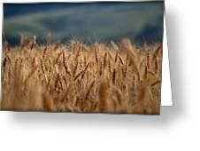 Waves Of Grain Greeting Card