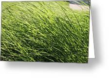 Waving Grass Greeting Card