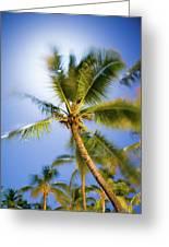 Waving Palm Greeting Card