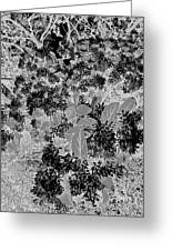 Waxleaf Privet Blooms On A Sunny Day In Black And White - Color Invert Greeting Card