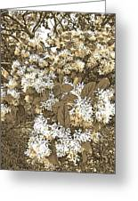 Waxleaf Privet Blooms On A Sunny Day In Sepia Tones Greeting Card