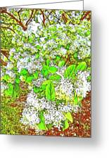 Waxleaf Privet Blooms On A Sunny Day Greeting Card
