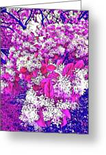 Waxleaf Privet Blooms On A Sunny Day With Magenta Hue Greeting Card