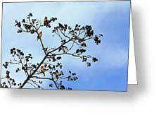Waxwing Museum Greeting Card