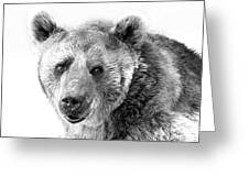 Wb Portrait Of A Bear Greeting Card