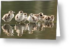 We Are Family - Seven Egytean Goslings In A Row Greeting Card