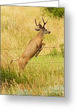 We Have Lift Off ... Montana Art Photo  Greeting Card