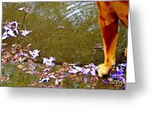 Wading On Lavender   Greeting Card