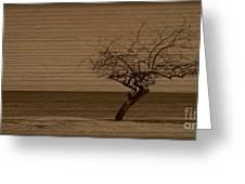 Weatherd Beach Tree Greeting Card