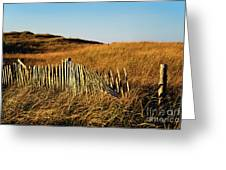 Weathered Dune Fence. Greeting Card