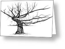 Weathered Old Tree Greeting Card