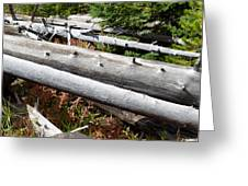 Weathered Trees Fallen Down Within Yellowstone National Park Greeting Card