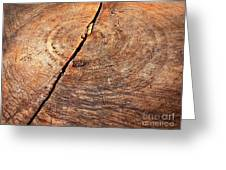 Weathered Wood On Old Tree Greeting Card