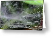Web After Rain 2 Greeting Card