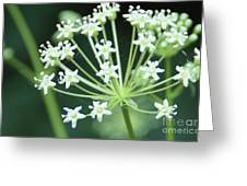 Web Design - 2 Greeting Card